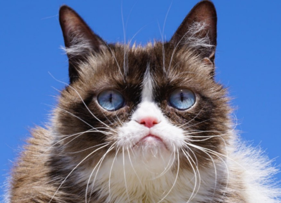 Grumpy Cat passes at 7
